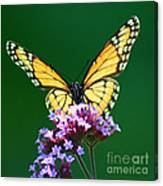 Viceroy Butterfly Square Canvas Print