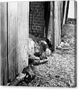 Victims Of The Gardelegen Massacre Canvas Print
