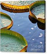 Victoria Waterlilies Canvas Print
