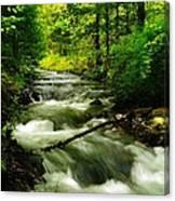 Viento Creek In June Canvas Print