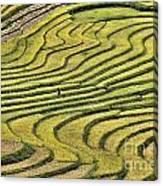 Vietnam Sapa Iv Canvas Print