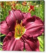 Viette's Daylily. Dark Purple 01 Canvas Print