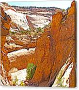 View From Above Capitol Gorge Pioneer Trail In Capitol Reef National Park-utah Canvas Print