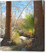 View From Creek Bed In Andreas Canyon In Indian Canyons-ca Canvas Print