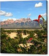 View From Roadrunner Canvas Print