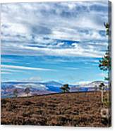 View From Scolty Hill 1 Canvas Print