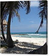 View From Under A Palmtree Canvas Print
