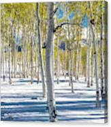 View Of Aspens In Fresh Winter Snow Canvas Print