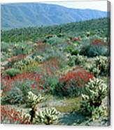View Of Desert Wild Flowers And Cacti Canvas Print