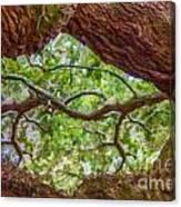 View Through Angel Oak Tree Canvas Print