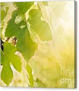 Vine Leaf Canvas Print