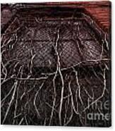 Vine Of Decay 1 Canvas Print