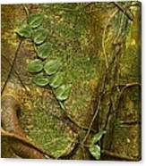 Vine On Tree Bark Canvas Print