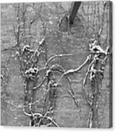 Vines After Snow In Black And White Canvas Print