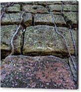 Vines On Stonework Canvas Print