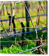 Vines On Wire 22637 Canvas Print