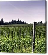 Vineyard 24077 Canvas Print