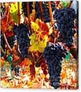 Vineyard 8 Canvas Print