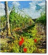 Vineyard And Poppies Canvas Print