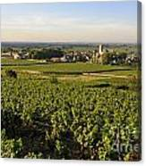 Vineyard And Village Of Pommard. Cote D'or. Route Des Grands Crus. Burgundy.france. Europe Canvas Print