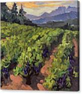 Vineyard At Dentelles Canvas Print