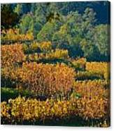 Vineyard Fall Canvas Print