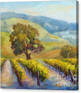 Vineyard Gold Canvas Print