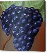 Vineyard Grapes On Terra Cotta Canvas Print