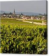 Vineyard In Front Of The Village Of Meursault. Burgundy Wine Road. Cote D'or.burgundy. France. Europ Canvas Print