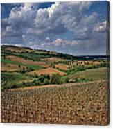 Vineyard In Frushka Gora. Serbia Canvas Print