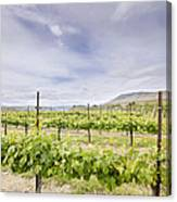 Vineyard Landscape In Maryhill Washington State Canvas Print