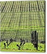 Vineyard Lines 23036 Canvas Print