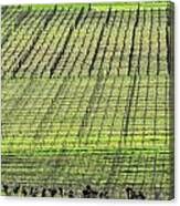 Vineyard Lines 23048 Canvas Print