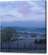 Vineyard Morning Light Canvas Print