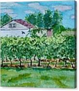 Vineyard Of Ontario 2 Canvas Print