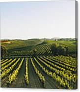 Vineyard Patchwork Canvas Print