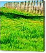 Vineyard Path 22628 Canvas Print