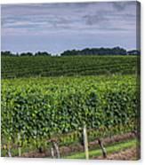 Vineyard Rows Canvas Print