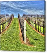 Vineyard Bodega Bay Canvas Print