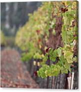 Vineyard View Canvas Print