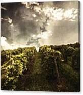 Vineyard Wanderlust Canvas Print