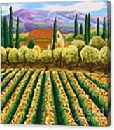Vineyard With Olives Tuscany Canvas Print