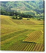 Vineyards Below Zellenberg France 1 Canvas Print