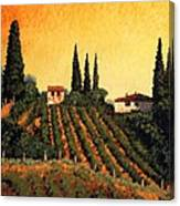 Vineyards Of Tuscany Canvas Print