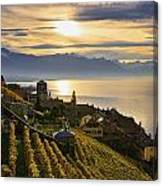 Vineyards Saint-saphorin, Lavaux Canvas Print