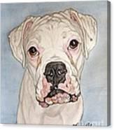 Vinnie The White Boxer Canvas Print