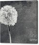 Vintage Allium Flower Canvas Print