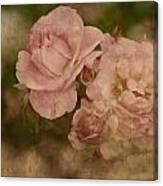 Vintage Beauties Canvas Print