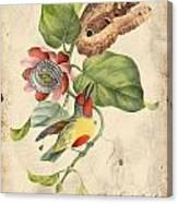 Vintage Bird Study-b Canvas Print