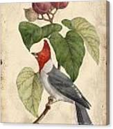 Vintage Bird Study-d Canvas Print